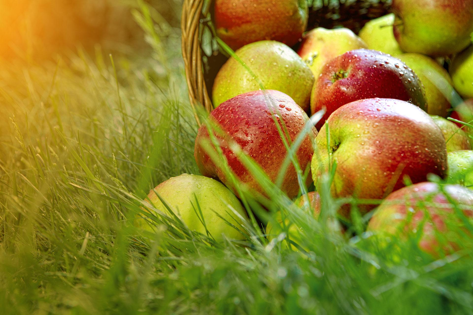 Panier pommes et gazon